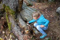 2018_FE_Parkfüchse_Eichhörnchen_Nüsse-verstecken